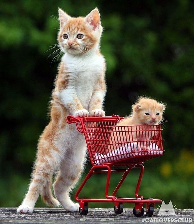 Shop for Cats